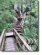 West Coast Rainforest Trail Vacation House Accommodation Vancouver Island BC